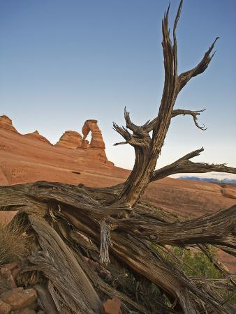 Delicate Arch of Arches National Park, Utah