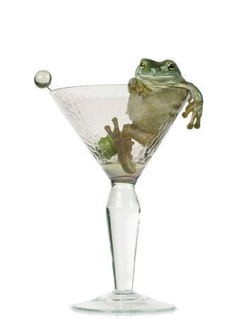 Drunken Frog in Empty Martini Glass