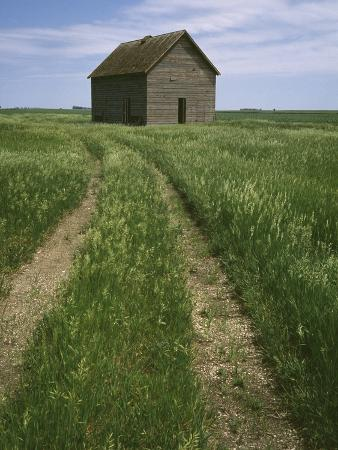 Grass Road Leading To Barn/Eagle Grove/Iowa