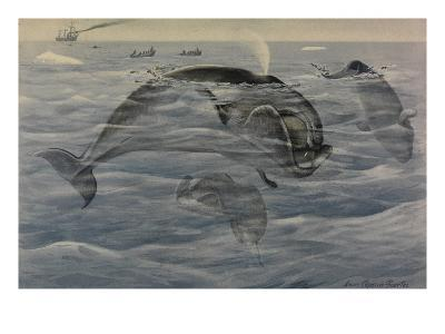 A Painting of Greenland Right Whales, also known as Bowheads