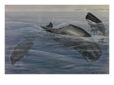 A Painting of Three Sperm Whales, also known as Cachalots