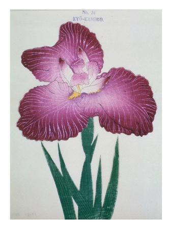 Kyo-Kanoko Book of a Dark Pink Iris