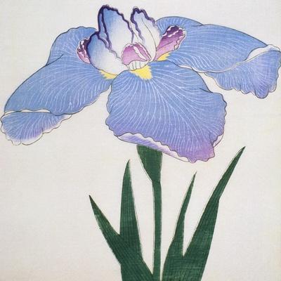 Kaku Jaku Ro Book of a Blue Iris
