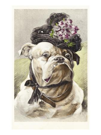 Hand-Colored Postcard of a Bulldog Dressed in a Bonnet