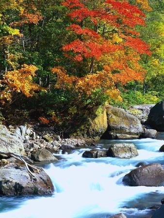 Stream and Autumn Leaves