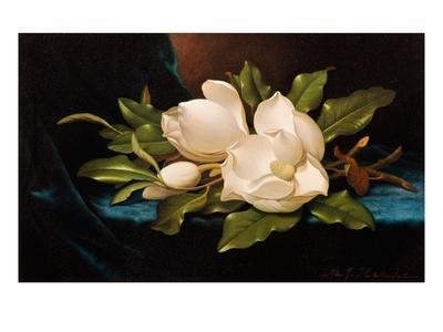 Giant Magnolias on Blue Cloth