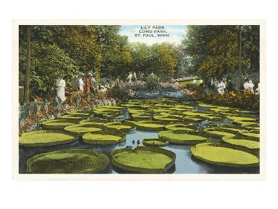 Lily Pads, Como Park, St. Paul, Minnesota