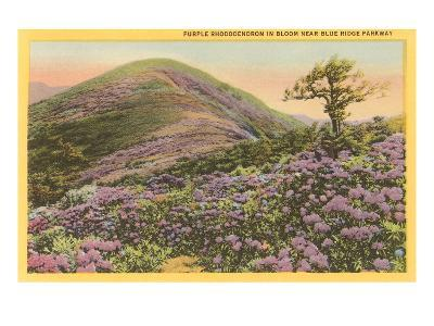 Rhododendrons, Blue Ridge Parkway, North Carolina