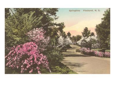 Spring in Pinehurst, North Carolina