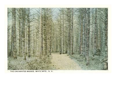 Enchanted Woods, White Mountains, New Hampshire