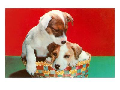 Jack Russell Puppies in Basket