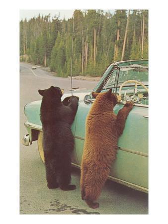 Bears Begging at Side of Car
