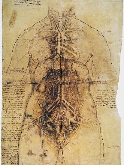 Leonardo Anatomy C1510 Giclee Print By Leonardo Da Vinci At