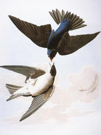 Audubon: Swallows, 1827-38