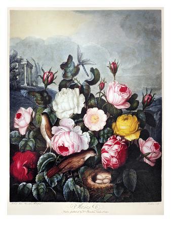 Thornton: Roses
