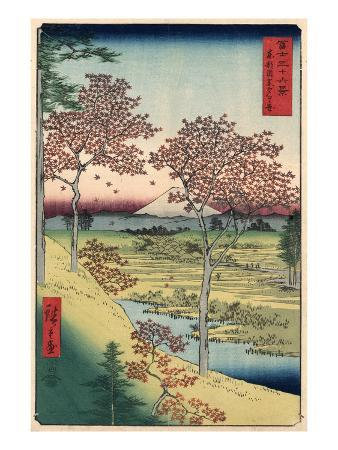 Japan: Maple Trees, 1858