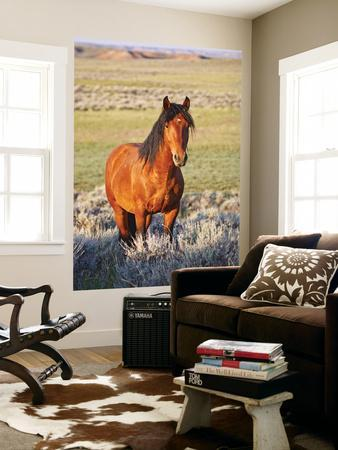 Feral Horse in the High Sagebrush Country East of Cody, Wyoming, USA