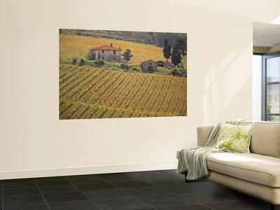Vineyard, Greve in Chianti, Tuscany, Italy