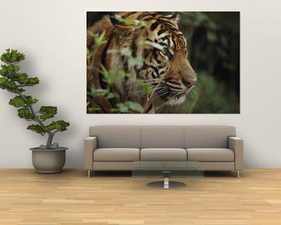 A Sumatran Tiger in the Asian Domain Exhibit