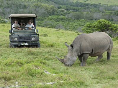 African White Rhinoceros, Inkwenkwezi Private Game Reserve, East London, South Africa