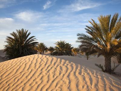 Great Dune at Dawn, Douz, Sahara Desert, Tunisia