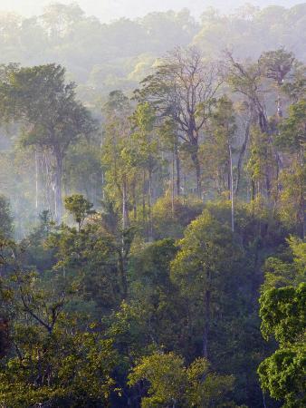 Sulawesi Tangkoko Rainforest, Sulawesi