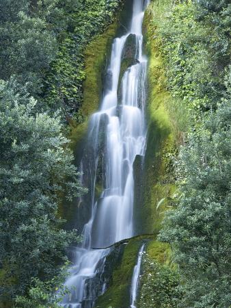 Waterfall, Centennial Gardens, Napier, Hawkes Bay, North Island, New Zealand