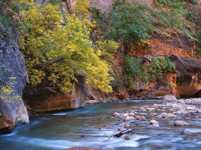 The Virgin River Flows Through the Narrows, Zion National Park, Utah, Usa