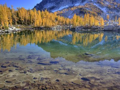 Golden Larch Trees, Enchantment Lakes, Alpine Lakes Wilderness, Washington, Usa