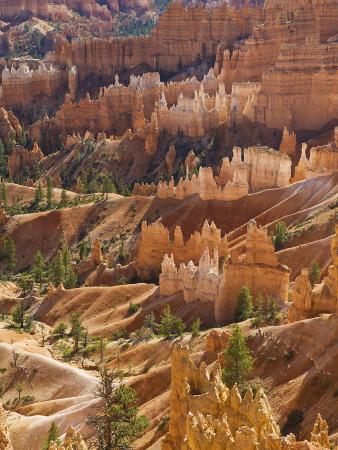 Backlit Sandstone Hoodoos in Bryce Amphitheater, Bryce Canyon National Park, Utah, USA