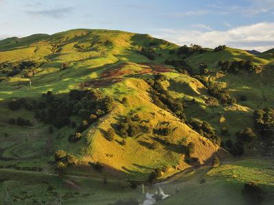 Farmland Near Taraka, Gisborne, North Island, New Zealand, Pacific