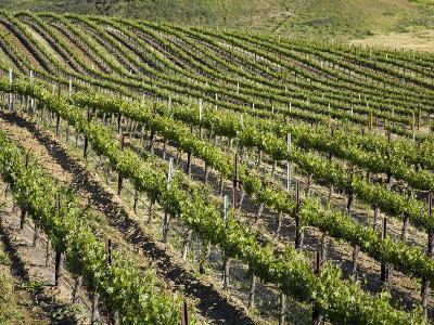 Leonesse Winery, Temecula, California, United States of America, North America