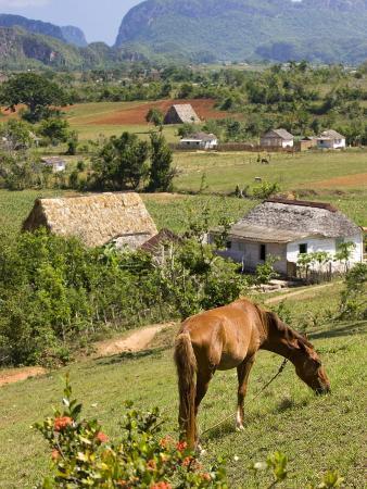 Horse Grazing on a Hillside in the Valle De Vinales, Pinar Del Rio Province, Cuba