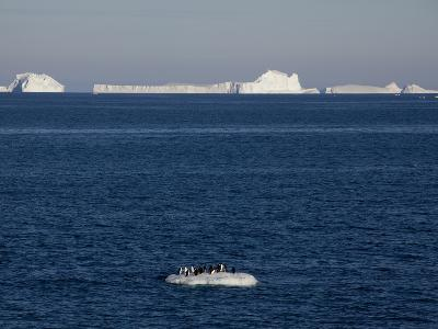 Adelie Penguins (Pygoscelis Adeliae) on Ice Floe, Dumont D'Urville, Antarctica, Polar Regions