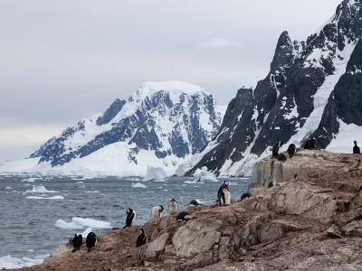 Shags and Penguins on Petersmann Island, Antarctica, Polar Regions