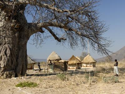Traditional Settlement and Large Baobab Tree Near Lake Kariba, Zimbabwe, Africa