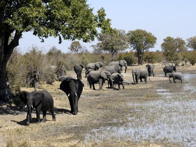 Group of Elephants After Mud Bath, Hwange National Park, Zimbabwe, Africa