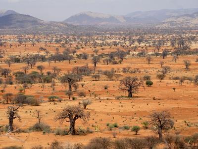 Masai Steppe, Near Arusha, Tanzania, East Africa, Africa