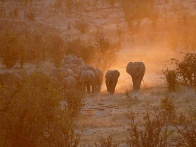Elephants, Hwange National Park, Zimbabwe, Africa