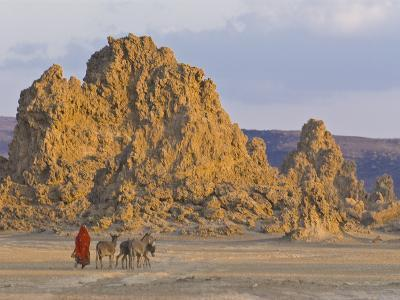 Local Afar Woman With Her Donkeys on Her Way Home, Lac Abbe, Republic of Djibouti, Africa
