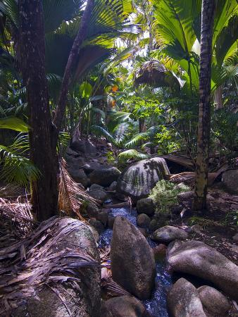 Beautiful Rocks in the Jungle of Valle De Mai, Praslin, Seychelles, Africa