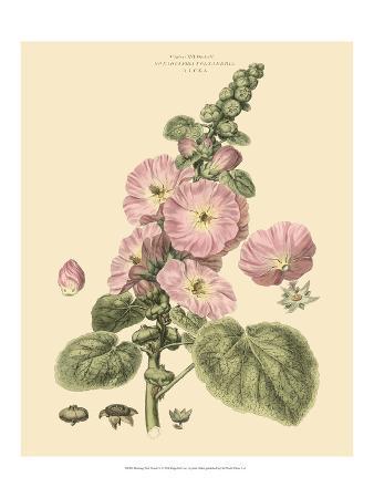 Blushing Pink Florals V