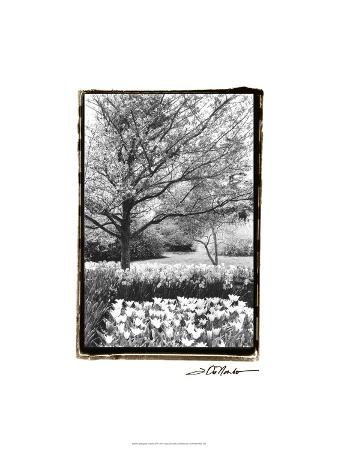 Springtime Garden III