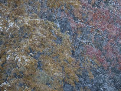 Winter's First Snow Dusts Autumn Foliage in the Adirondacks