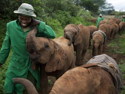Elephant Orphans Form Intense Bonds With Their Caregivers and Vice Versa