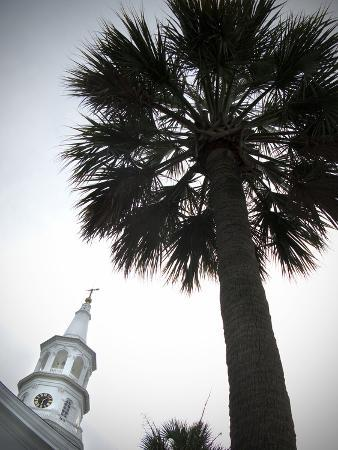 City Hall with a Palm Tree in the Foreground in Charleston