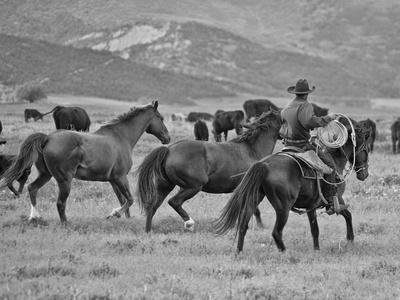 A Cowboy Herding Cattle in Field