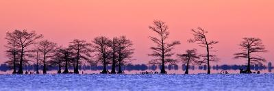Silhouetted Cypress Trees at Sunrise in a Lake