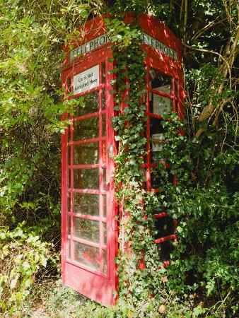 Overgrown Telephone Box, England, United Kingdom, Europe