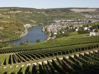 Vineyards and Village of Machtum, Mosel Valley, Luxembourg, Europe